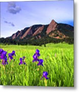 Iris And Flatirons Metal Print