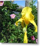 Iris And Wild Roses Metal Print