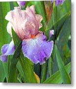 Iris Beauty Metal Print