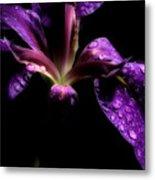 Iris Bloom Metal Print
