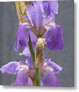 Iris Blooms In The Rain Metal Print