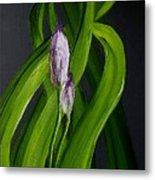 Iris Buds  49 Metal Print