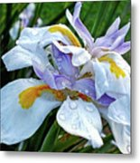 Iris Enjoying The Sunshine Metal Print by Kaye Menner