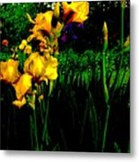 Iris Field In Abstract Metal Print