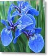 Iris Floral  Metal Print