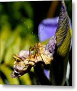 Iris Flower And Visitor Metal Print