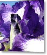 Iris Flower Art Print Purple Irises Botanical Floral Artwork Metal Print