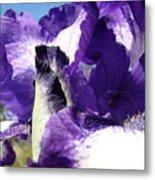 Iris Flower Art Print Purple Irises Botanical Floral Artwork Metal Print