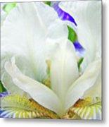 Iris Flower Art Print White Blue Purple Irises Baslee Troutman Metal Print