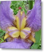 Iris Flower Lavender Purple Yellow Irises Garden 19 Art Prints Baslee Troutman Metal Print