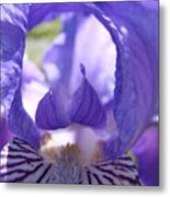 Iris Flower Purple Irises Floral Botanical Art Prints Macro Close Up Metal Print