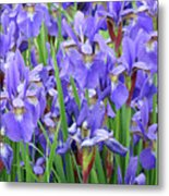 Iris Flowers Artwork Purple Irises 9 Botanical Garden Floral Art Baslee Troutman Metal Print