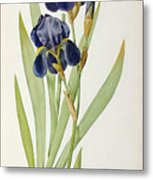 Iris Germanica Metal Print by Pierre Joseph Redoute