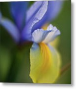 Iris Grace Metal Print by Mike Reid