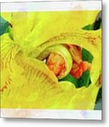 Iris In Abstract Metal Print