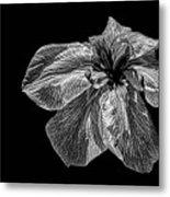 Iris In Black And White Metal Print