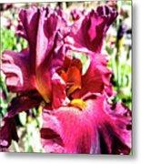 Iris In Close Up Metal Print