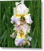 Iris In Grass Metal Print