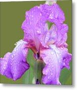 Iris In Summer Rain  Metal Print