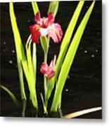 Iris In Water Metal Print