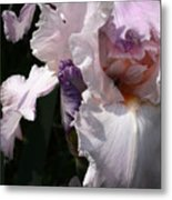 Iris Lace Metal Print
