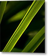 Iris Leaves Metal Print
