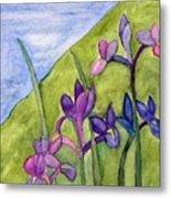 Iris Meadow Metal Print