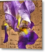 Iris On Vintage 1912 Postcard Metal Print