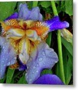 Iris Rain Blue Metal Print