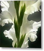 Gladiolus Spectacular #2 Metal Print