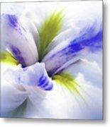 Iris Spring Metal Print