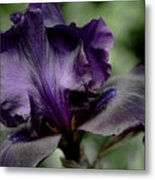 Iris - Superstition Metal Print