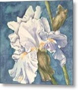 Iris Twenty One Metal Print