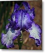 Iris Unraveled Metal Print