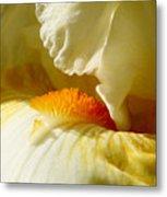 Iris With Touch Of Orange Metal Print
