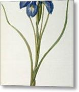 Iris Xyphioides Metal Print by Pierre Joseph Redoute