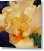 Irises Art Prints Peach Iris Flowers Artwork Floral Botanical Art Baslee Troutman Metal Print