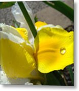Irises Artwork Iris Flowers Art Prints Flower Rain Drops Floral Botanical Art Baslee Troutman Metal Print