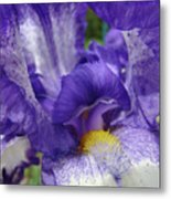 Irises Artwork Purple Iris Flowers Art Prints Canvas Baslee Troutman Metal Print