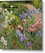 Irises At Bedfield Metal Print