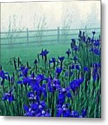 Irises At Dawn 3 Metal Print