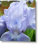 Irises Blue Iris Flower Light Blue Art Flower Soft Baby Blue Baslee Troutman Metal Print