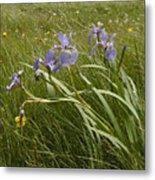 Irises By The Sea Metal Print