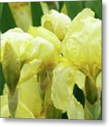 Irises Flower Garden Yellow Iris Baslee Troutman Metal Print