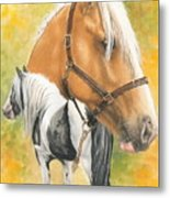 Irish Cob Metal Print