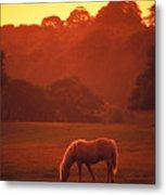 Irish Horse In Gloaming Metal Print