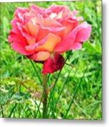 Irish Rose  Metal Print