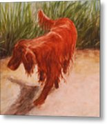 Irish Setter In The Grass Metal Print