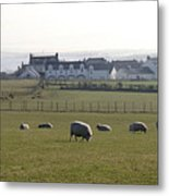 Irish Sheep Farm Metal Print