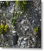 Irish Stone Flowers Metal Print